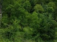 Използваема ливада,  (за продажба) в Ловеч, Тетевен, Черни Вит, 67,970 BGN