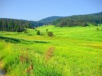 Нива, Ливада, Мери и пасища, Използваема нива, Изоставена нива, Затревена нива, Земеделска територия, Трайни насаждения, Използваема ливада, Пасище, Посевна площ, Други,  (сдача внаем) �