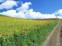Нива, Ливада, Зеленчукова градина, Използваема нива, Използваема ливада, Пасище, Посевна площ,  (lease) в Ловеч