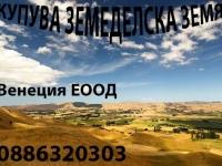 Нива, Земеделска територия, Полска култура, Посевна площ,  (купува) в Монтана, Вълчедръм