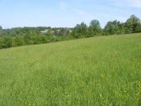 Земеделска територия,  (за продажба) в Габрово, Габрово, Думници, 18,000 BGN
