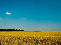 Нива, Използваема нива, Полска култура,  (купить) в Монтана