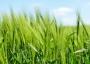 Нараства интересът към кредити за земеделие