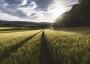 Земеделските стопани получиха над 450 млн. лева за зелени плащания